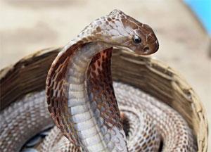 Oroscopo Maya Serpente